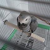Apindji (Bird debout Barre de perchoir plate-forme de support pour cage jouet à mâcher pour perroquet cacatoès Amazones Calopsittes inséparables
