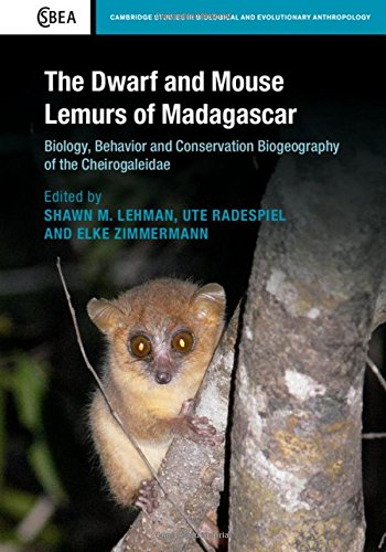 The Dwarf and Mouse Lemurs of Madagascar: Biology, Behavior and Conservation Biogeography of the Cheirogaleidae (Cambridge Studies in Biological and Evolutionary Anthropology)