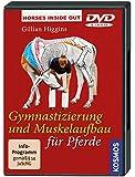 Gymnastizierung Und Muskelaufbau Für Pfe