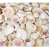 Weiß Muscheln 200g Shell Mix Strand Hochzeit Muscheln 2cm–5cm, Muscheln Conch cerith Muscheln weiß Eiszapfen