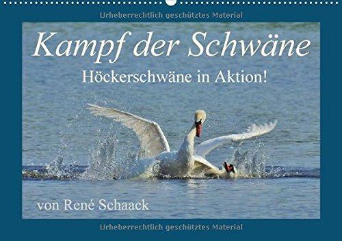 Kampf der Schwäne. Höckerschwäne in Aktion! (Wandkalender 2018 DIN A2 quer): Dynamik und Aktion im Reich der Schwäne! (Monatskalender, 14 Seiten ) (CALVENDO Tiere)