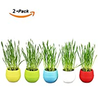 Amakunft 2 Pack of Organic Cat Grass Kit, Wheat Grass Seeds Planter Soil, Natural Hairball Control and Remedy, Grow Wheat Grass for Dog, Cat, Rabbit, Guinea Pig