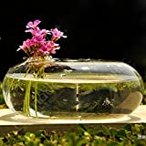 Glass Vase Terrarium Vases Flower Pots Tabletop Glass Candle Modern Vaso Wedding Floor Air Planter Decoratives Vase