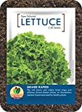 Best Lettuces - GroBro Lettuce Grand Rapids - Healthy Clean Lettuce Review