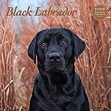 Labrador Black Deluxe 2020 Kalender