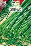 500 C.ca Semi Erba Cipollina - Allium Schoenoprasum In Confezione Originale Prodotto in Italia - Erbe Cipolline