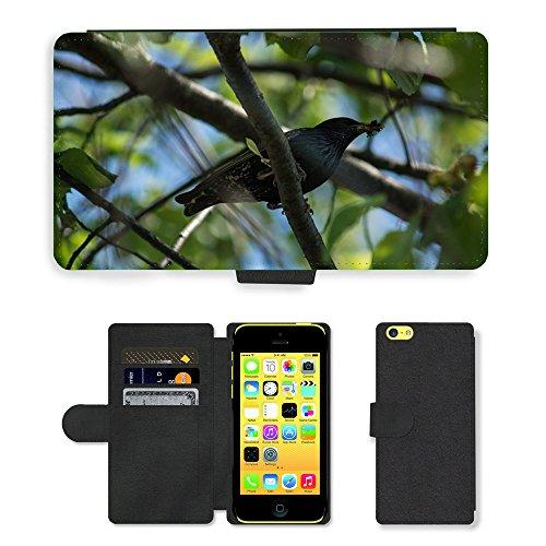 Just Mobile pour Hot Style Téléphone portable étui portefeuille en cuir PU avec fente pour carte//m00139694Starling branche insectes Nourriture//Apple iPhone 5C