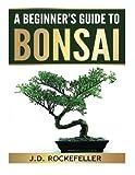 A Beginner's Guide to Bonsai