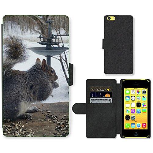 Just Mobile pour Hot Style Téléphone portable étui portefeuille en cuir PU avec fente pour carte//m00140176écureuil gris Animal Sauvage pour rongeurs//Apple iPhone 5C
