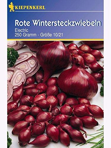Kiepenkerl - Pflanzzwiebeln 611603