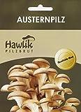Hawlik Pilzbrut I das Original I Austernpilze als Dübel-Brut zum selber...