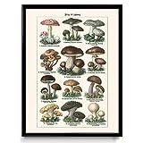 VP1097UK Pilz-Illustration Vintage Print 22, Baumwolle, Simple Ivory, 12 x 18 in
