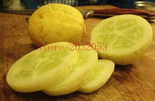 100 graines de concombre de citron rares graines NO OGM légumes maison jardin bon pour le corps, délicieux jardin plantes en pot organique