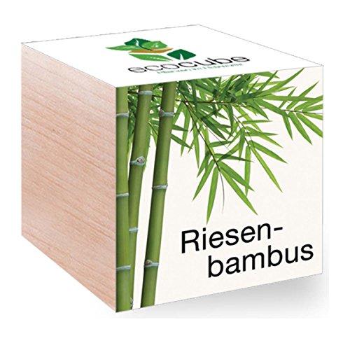 Feel Green Feel Green EcoCube Riesenbambus, Pflanze mit Samen aus ökologischer Edel-Holzbox als Geschenk für Zuhause, Einweihungsgeschenk für Frauen und Männer, Geschenkidee (Bambus Blumen)