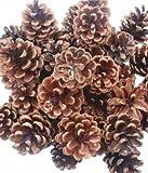 500g (25) Christmas Decoration Austriaca Florist Fir pine Cones