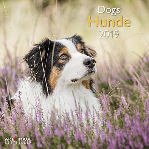 Hunde 2019 - Tierkalender, Fotokalender, Wandkalender, Hundekalender - 30 x 30 cm (Hund Kalender)