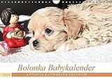 Bolonka Babykalender 2019 (Wandkalender 2019 DIN A4 quer): Ein gelungener Kalender mit hinreißenden Welpenfotos, denen sich kein Herz verschließen kann. (Monatskalender, 14 Seiten ) (CALVENDO Tiere)