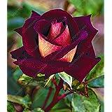 100 piezas / bolsa de 16 tipos de semillas de rosa raras Semillas Semillas de flores de color Bonsai Inicio planta en maceta