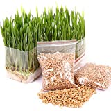 Zoe Organic Cat Grass Plant,Pet Grass Seeds, Natural Hairball Control and Hairball Remedy for Cats 30g