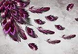 Fototapete Roter Pfau Feder Lila Rosa grau Beton Vogel Vogelfedern Fasan Sri Lanka Indien XXL 400 x 280 cm - 8 Teile Vlies Tapete Wandtapete - Moderne Vliestapete - Wandbilder - Design Wanddeko -