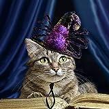 Namsan Pet Kostüm mit Einer Spinne Kostüm für Hund Katze Special Pet Hat Halloween, Party Kostüm - Lila