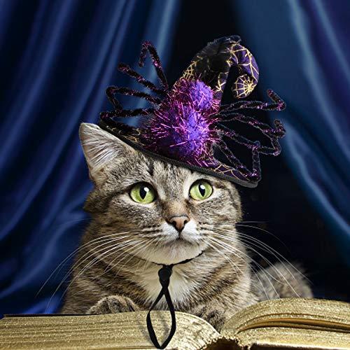 (Namsan Pet Kostüm mit Einer Spinne Kostüm für Hund Katze Special Pet Hat Halloween, Party Kostüm - Lila)