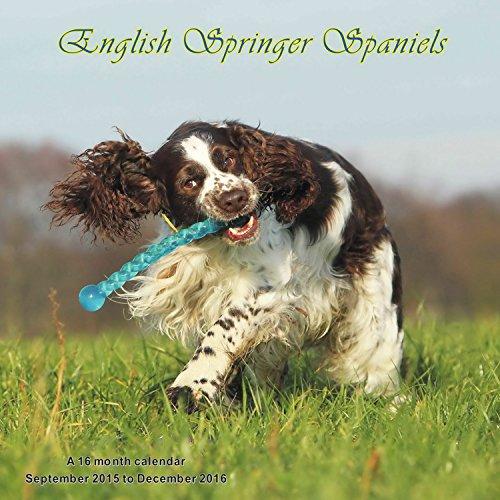 English Springer Spaniels Calendario Calendar 2016