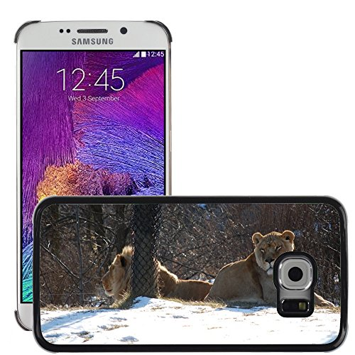 ld Hart Handy Schwarz Schutz Case Cover Schale Etui // M00142463 Lioness Lion Animal Zoo Katze // Samsung Galaxy S6 EDGE (Not Fits S6) (Lioness-bild)