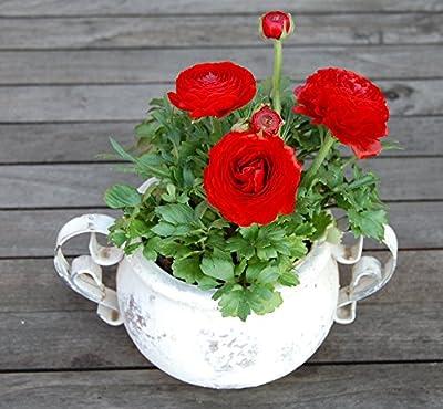 Keramik/Topf Valo creme-antik 1st. von Exner bei Du und dein Garten