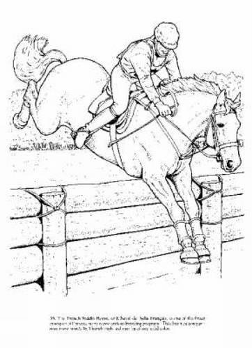 big-book-of-horses-to-color-dover-nature-coloring-book
