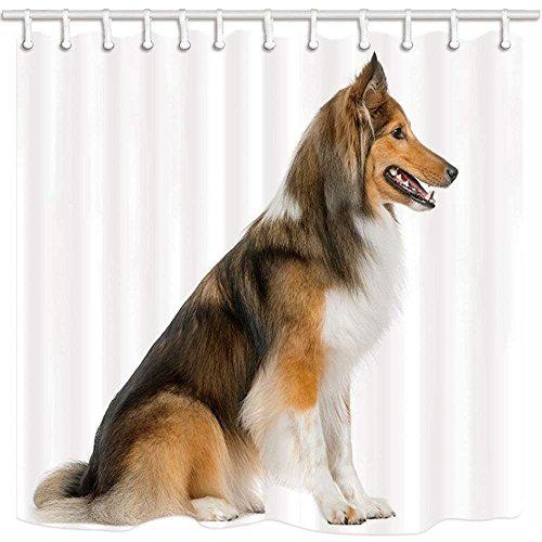 CDHBH Pet-Hund Decor Vorhang für die Dusche Wasserspeier Scotch colloe Weiß Hintergrund Oder Hotel Badezimmer Polyester-Schimmelresistent-Wasserdicht Duschvorhang Set mit Haken 180,3x 180,3cm