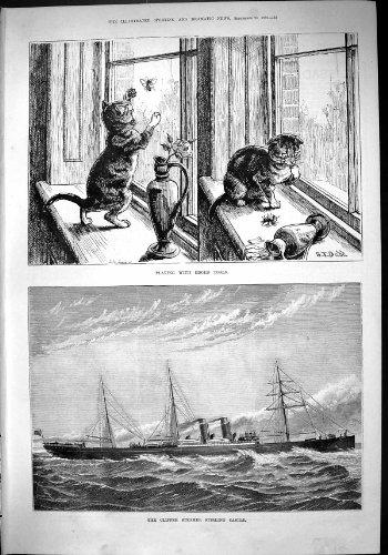 Scherer-Dampfer-Lieferungs-Stirlings-Schloss-Katzen-Biene 1882, die Umrandete Werkzeuge Dadd Spielt