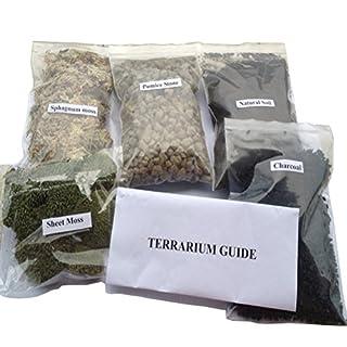 AmgateEu Terrarium/Fairy Garden DIY Kit - Create Your Own Living Terrarium or Fairy Garden - Planting Kit Large