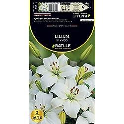 Semillas Batlle 076602Bols - Bulbo Lilium Asiático Blanco