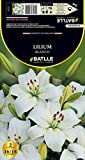 Samen Batlle–Lilium Asiatische Glaskolben Asiatisch, Weiß
