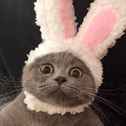 Fighrh Haustier Katze verkleiden sich Ostern Kostüm Katze lustig niedlichen Stil Haustier Katze Foto Headwear einstellbar Katze Hase Kostüm Welpen Ostern Ausrüstung niedlichen Häschen Ohr Kopfbedeckun (Katze Ohr Kostüme)
