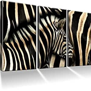 zebra afrika bilder auf leinwand mit keilrahmen xxl bild wandbilder kunstdruck fertig. Black Bedroom Furniture Sets. Home Design Ideas