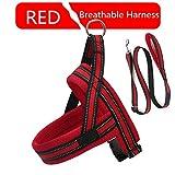 LUCYPET Reflektierende Leine Polyester-Bandseil Breathable Soft Harness Training Set Laufen ohne Zuggeschirr für kleine mittelgroße Hunde - Rot,L