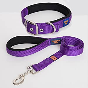 Ginger-Ted-High-Quality-Padded-Strong-Nylon-Dog-Collar-Lead-Value-Pack