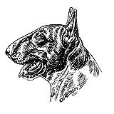 Emaille Warnschild Bullterrier Betreten auf eigene Gefahr! Schecker-Warnschilder Bullterrier