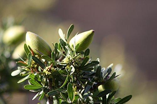 ARGANARGAN Bio-Arganöl 250ml, ungeröstet, kaltgepresst, auch für Haut- und Haarpflege geeignet - 6