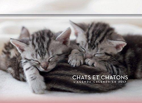 L'agenda-calendrier Chats & Chatons 2017