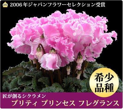 Graines Saisons vivace Fleur Cyclamen- 20 Graines