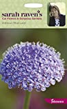 Johnsons - Sarah Raven's Cut Flowers - Didiscus Blue Lace - 150 Seeds