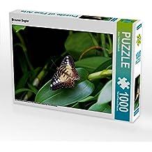 Brauner Segler 1000 Teile Puzzle quer: Schmetterlinge der Tropen bieten eine große Vielfalt an Form, Farbe und Erscheinung. (CALVENDO Tiere)