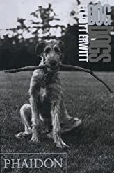 DogDogs