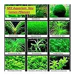 30x Aquarium Mix Saatgut Pflanzen Samen Zimmer Haus Neuheit #206