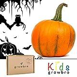 growbro Kids Kürbis Anzuchtset, Entdecker Set, Forscher Kinder, Natur entdecken, Geschenk für Kinder, Mitbringsel Kindergeburtstag, Zimmerpflanzen, Pflanzen Samen, Mitbringexperiment