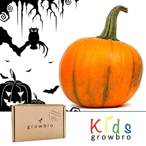 (growbro kids| Kürbis | Anzuchtset, Halloween, Kürbissamen, Halloween Deko, Geschenk Halloween, Kürbis Deko, Kürbis Samen)