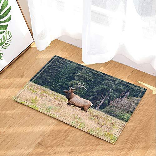 (cdhbh Wildtiere Decor Safari Elch stehend auf Gras gegen grün Forest Hintergrund Bad Teppiche rutschhemmend Fußmatte Boden Eingänge Innen vorne Kinder Matte 39,9x 59,9cm Badezimmer Zubehör)